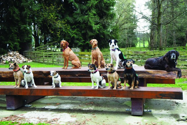 Meet the Conservation Dogs
