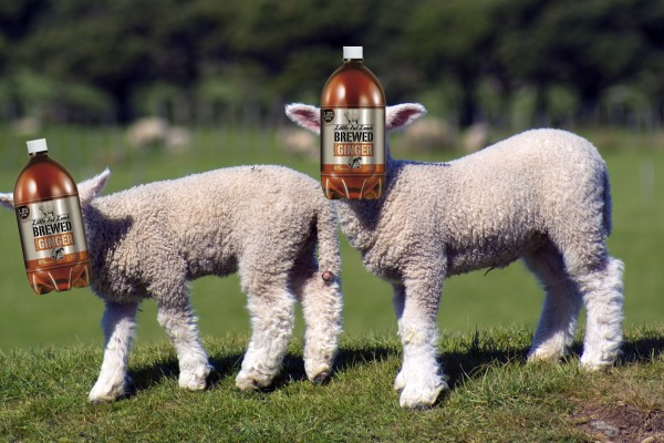 Little Fat Lamb Ginger Beer Tastes Like A Bitch Slap From Hell