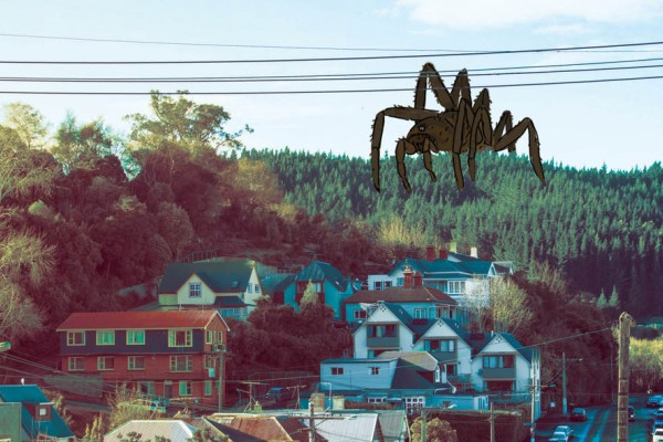 Spider Infestation Season Hits North Dunedin